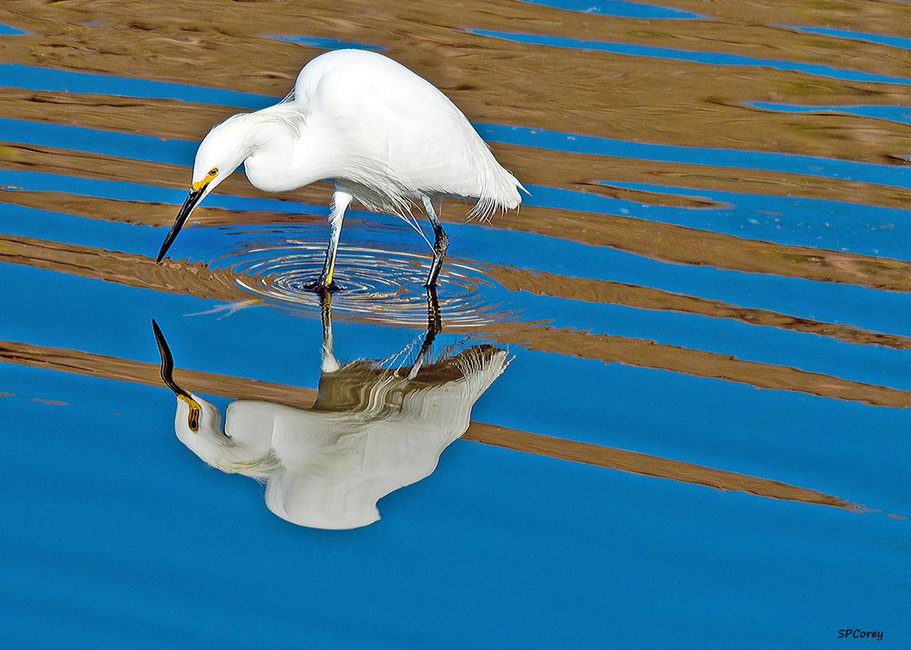 Mirror Image2