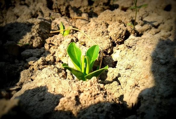 plant-912796_1280_2