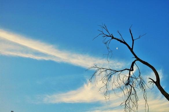 dry-branch-357418_1280