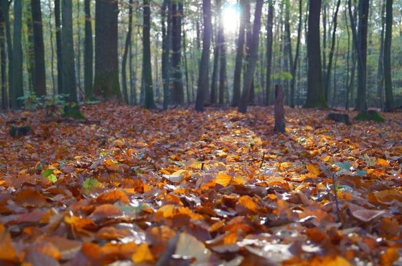 leaves-691045_1280