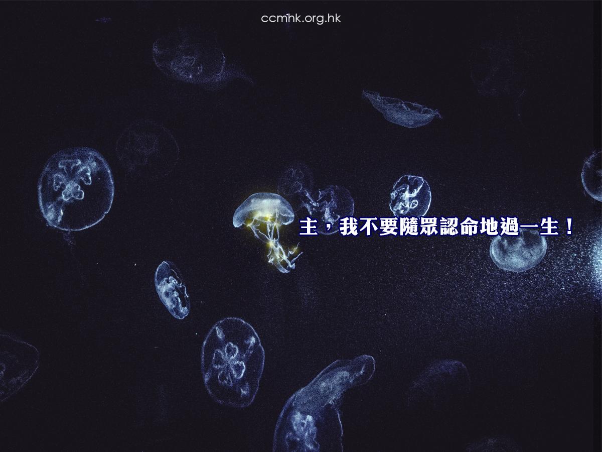 ccmFB_CP154_20181112